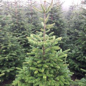 Kleine Kerstboom Met Kruis